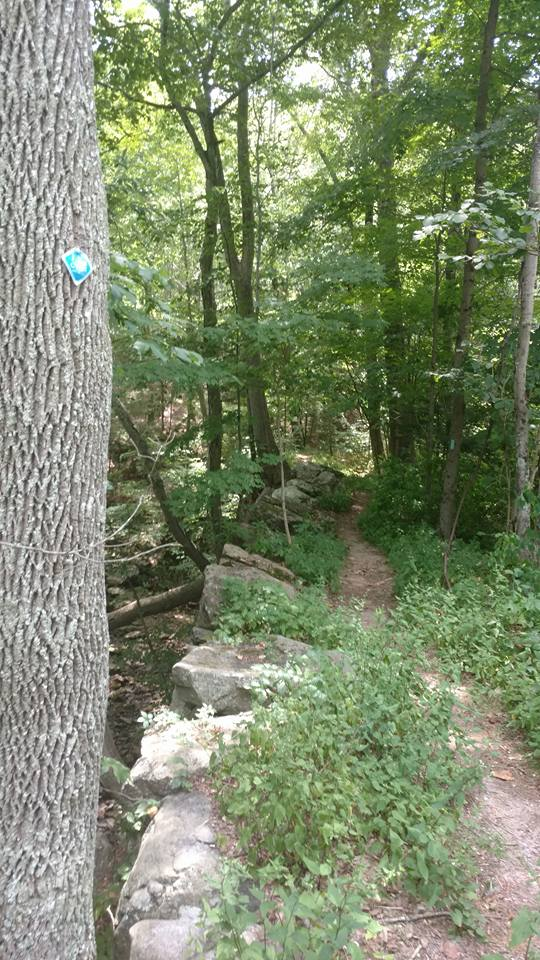 Eagle Beak Maintance Hike Pic 5